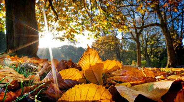 leaves-autumn-sun-615365